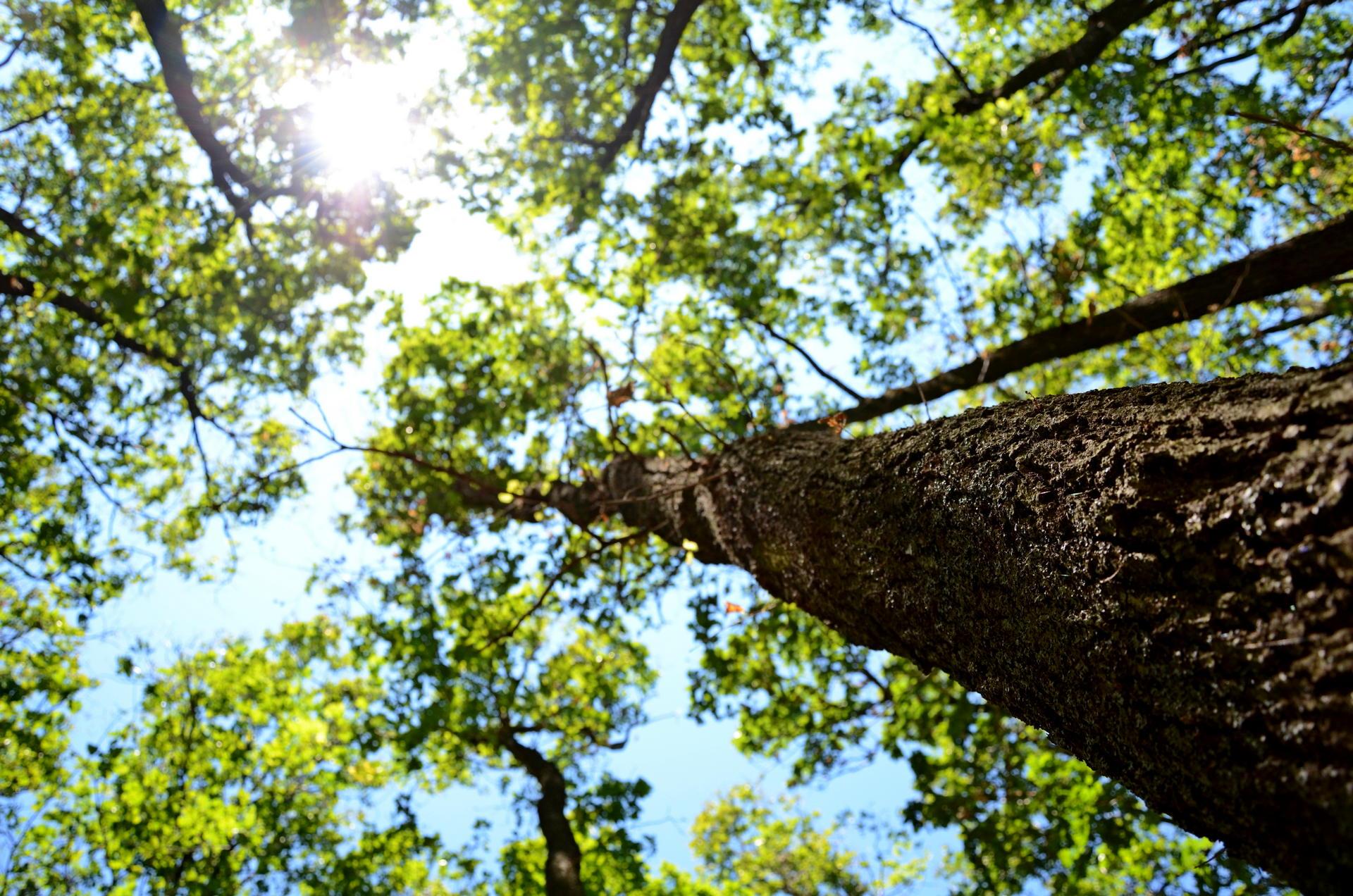 Wie reduziert der Wald Kohlendioxid?