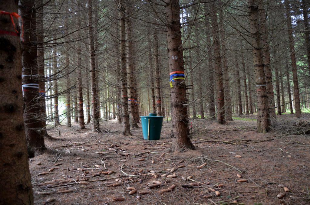 Hier lernen Waldbewirtschafter*innen wie man dichte Fichtenbestände pflegt.