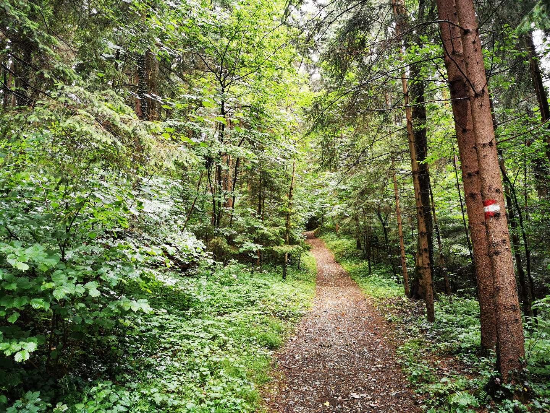 So erhöhen Sie die Biodiversität in Ihrem Wald