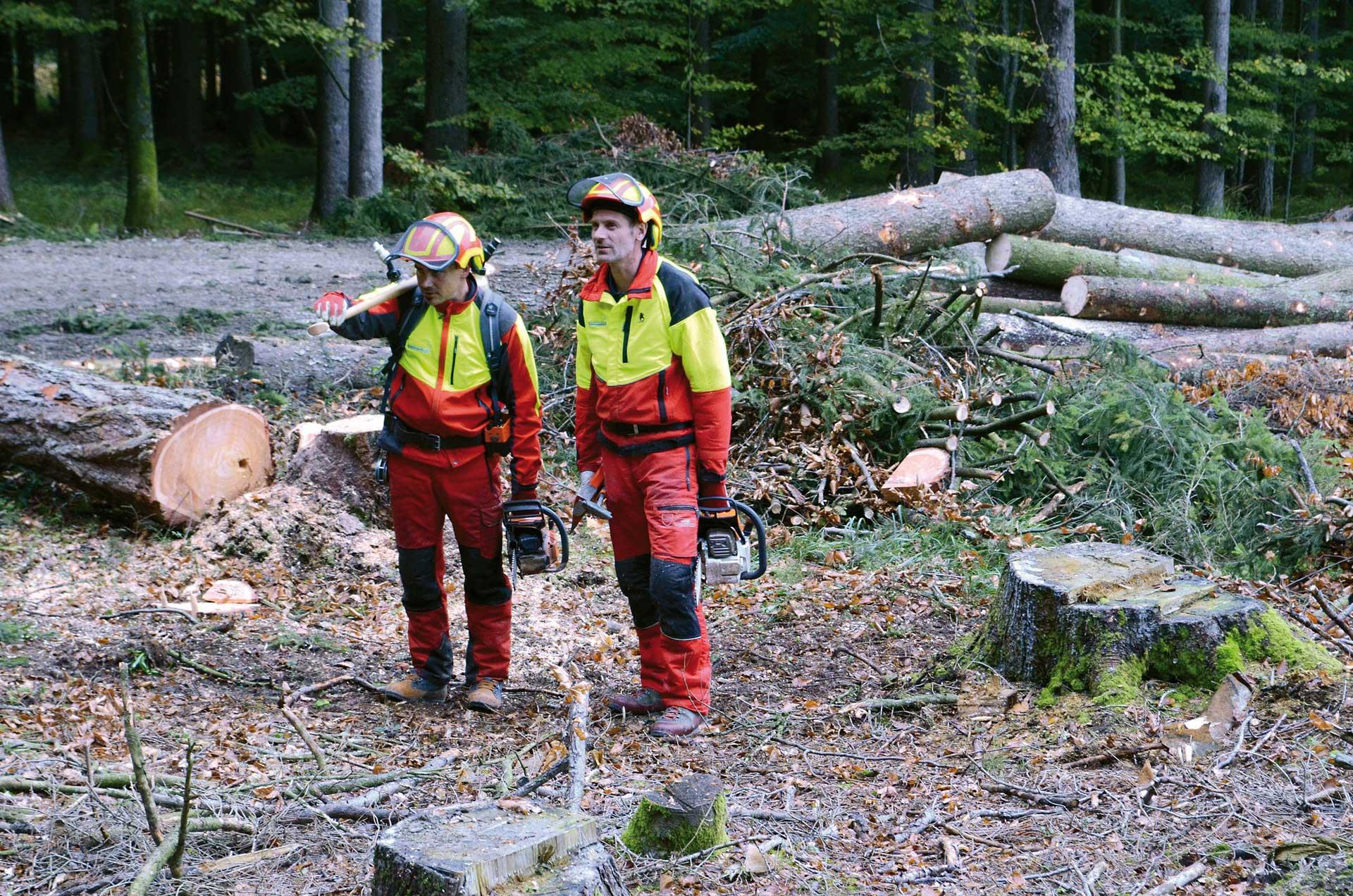 Mit dieser Ausrüstung arbeiten Sie sicher im Wald