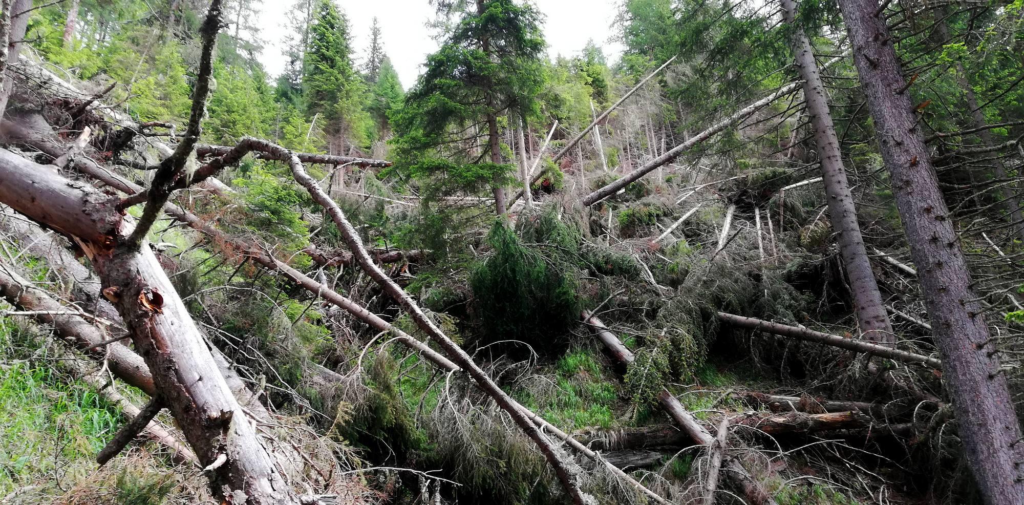 Gefahren bei der Aufarbeitung von Schadholz